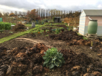 Image: The Grow Together Allotment